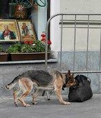 Moskova'da bomba paniği!