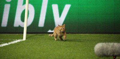 Sahaya kedi girdi, Beşiktaş golü buldu!