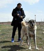 Ünal Karaman'ın 'Kangal köpeği' sevgisi
