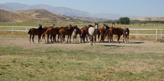 At sahiplerine ve yetiştiricilerine müjde! TJK duyurdu...