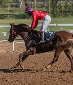 Atların peşinde 37 yılda 4 kıta dolaştı