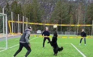 Mathias Berntsen'in köpeği Kiara voleybolculara taş çıkarttı!